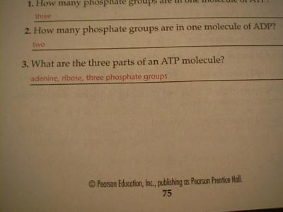 Miller And Levine Biology Worksheet Answers - Davezan